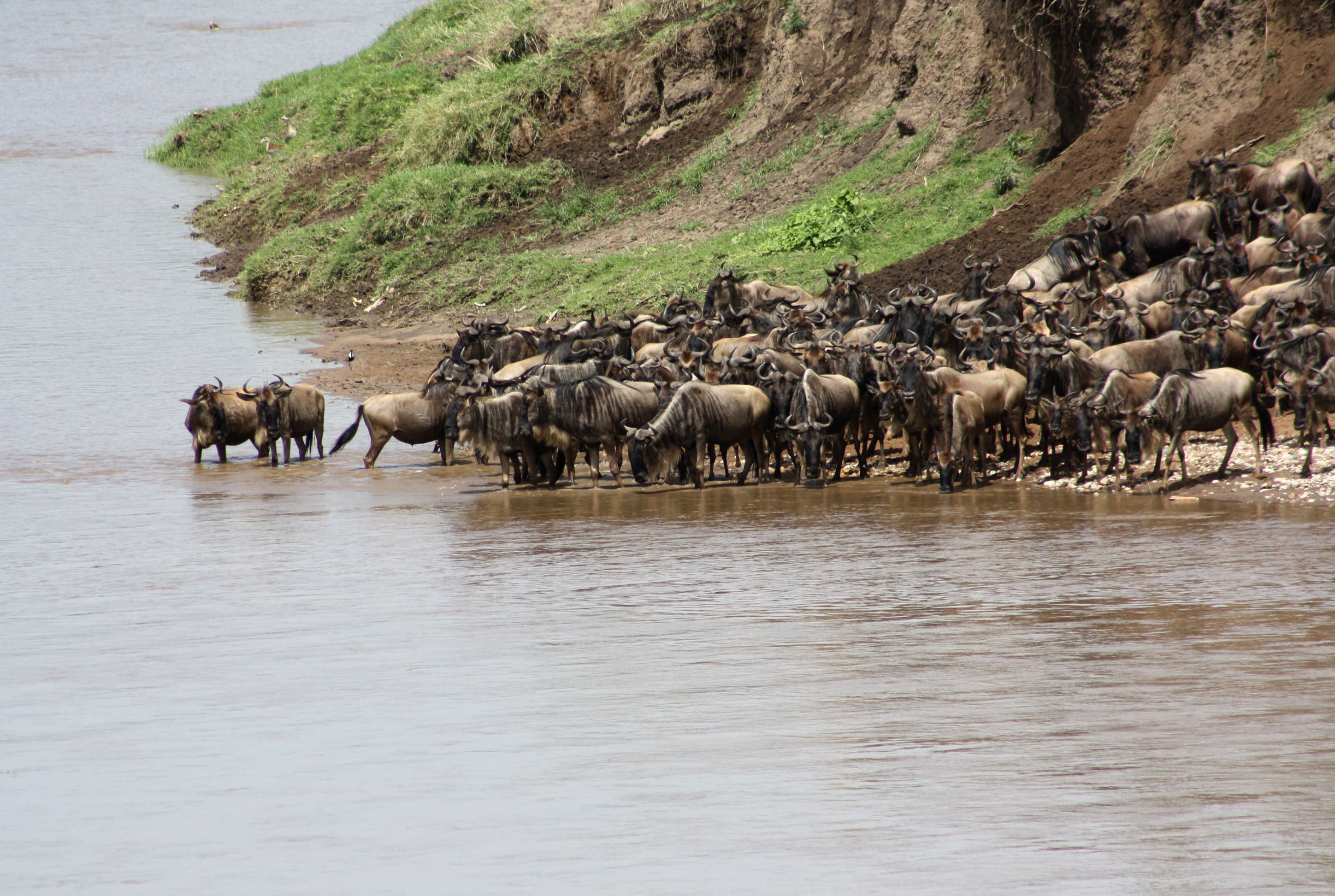 4-days-tanzania-safari